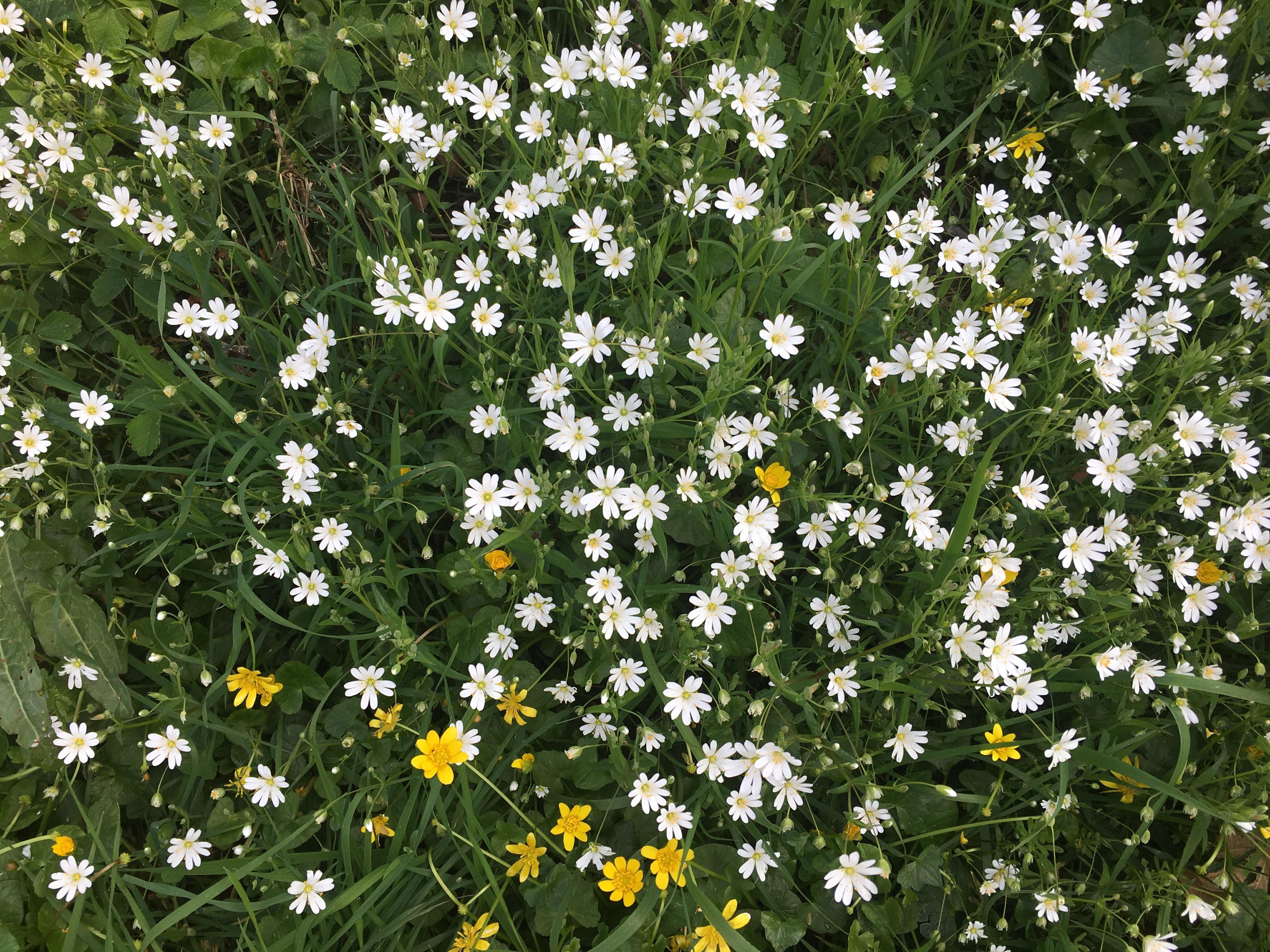 parterre fleurs blanches