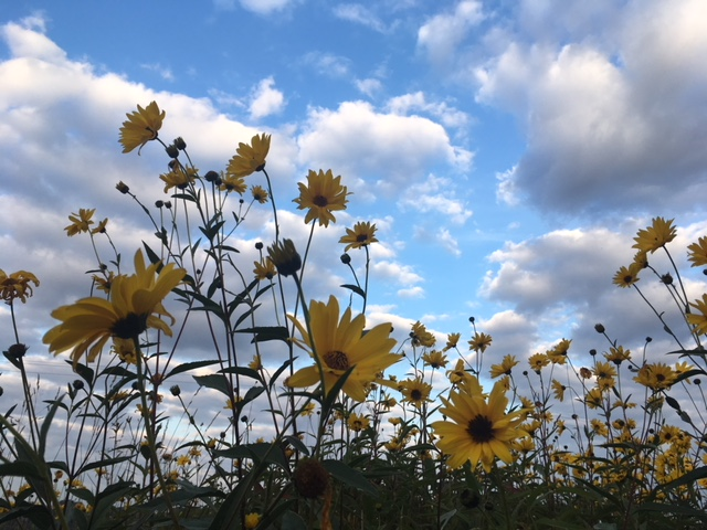 les fleurs de septembre